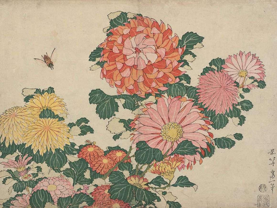 葛饰北斋的木版画,菊花和Horse,,从无名的系列称为大花