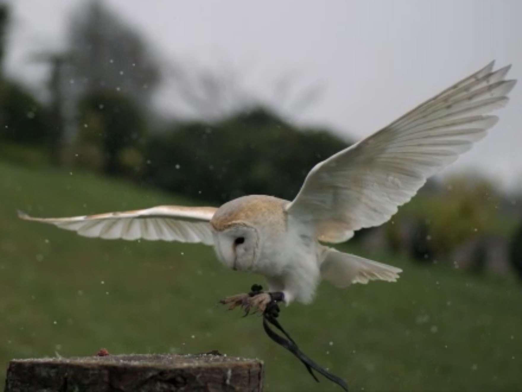 a still from a video that shows an owl landing