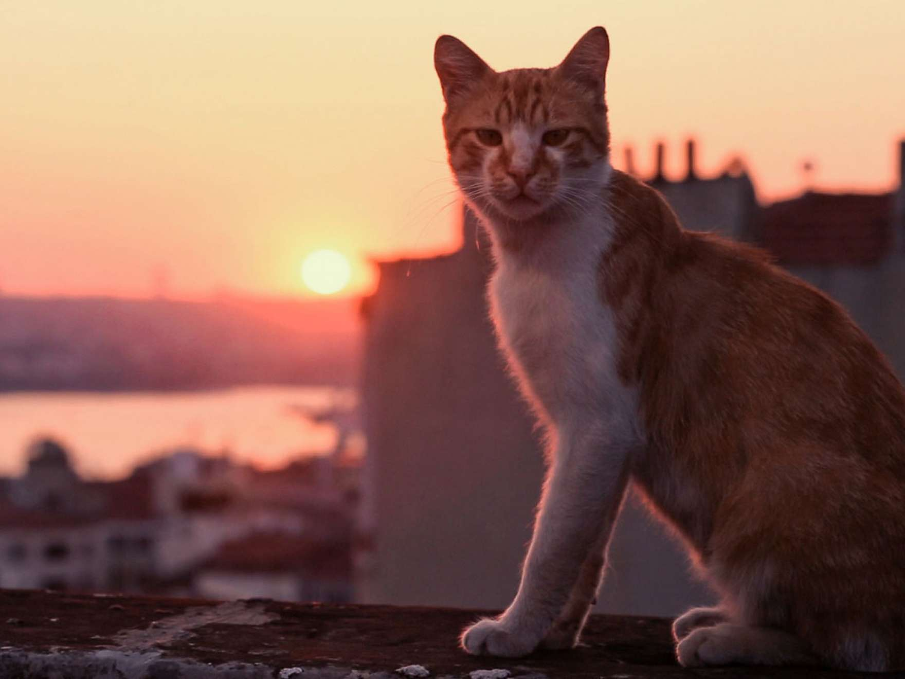 Film still from Kedi