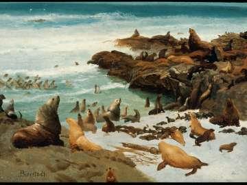 Seal Rocks, Farallons