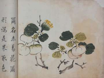Branch of apples (?)