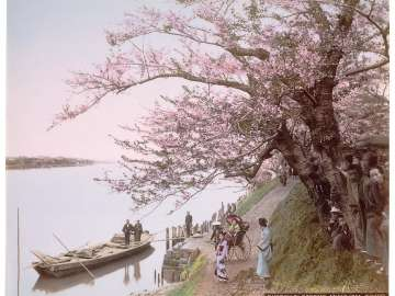 View of Cherry Blossoms at Mukojima on the Sumida River, Tokyo