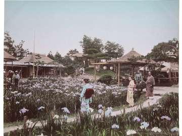 Iris Garden, Tokyo