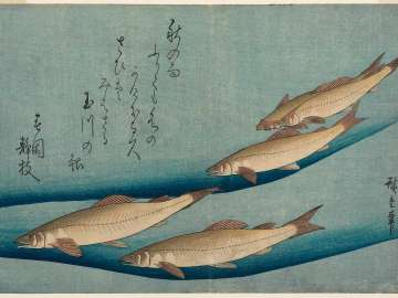 Trout, from an untitled series known as Large Fish