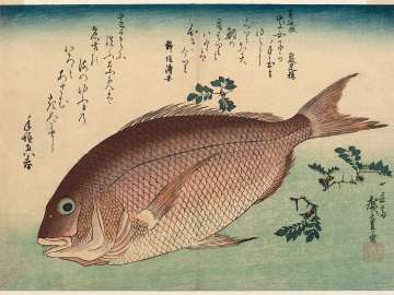 Sea Bream and Sansho Pepper, from an untitled series known as Large Fish