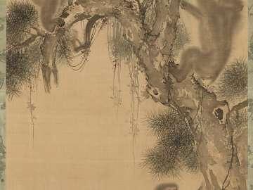 Monkeys on a Pine Tree