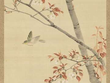 Birds, Maple, Cherry
