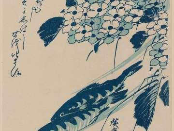 Sweetfish and Hydrangeas