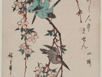 Small Birds and Weeping Cherry