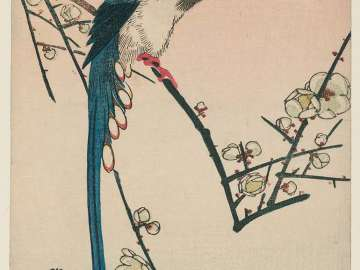 Long-tailed Bird on Flowering Plum Branch