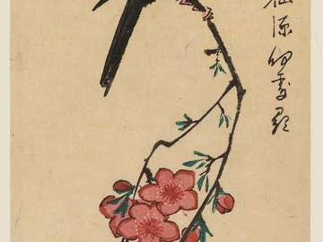 White-headed Bird and Peach Blossoms