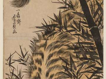 A Tiger in a Bamboo Grove