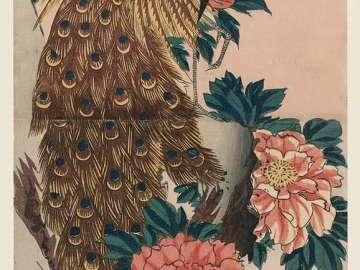 Peacock and Peonies