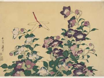Bellflower and Dragonfly, from an untitled series known as Large Flowers