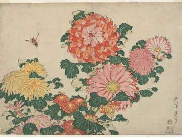 Chrysanthemums and Horsefly, from an untitled series known as Large Flowers