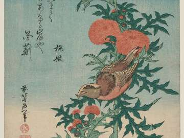 Shrike and Blessed Thistle (Mozu, oniazami), from an untitled series known as Small Flowers
