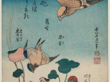 Shrike and Bluebird with Begonia and Wild Strawberry (Mozu, ruri, yuki-no-shita, hebi-ichigo), from the untitled series known as Small Flowers