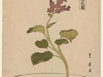 Water Plantain in Bowl with Carp Design, from the series Flower Arrangements by Various Modern Schools (Tôsei shoryû ikebana zu)