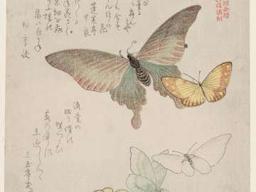 Moths and Butterflies, from the series A Picturebook of Butterflies (Gunchô gafu)