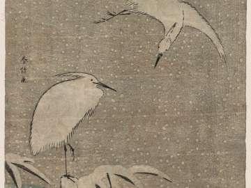 Herons in Snow