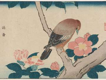 Sparrow Hawk (Yôkin) and Camellia, reprinted from the album Kaihaku raikin zui (A Compendium of Pictures of Birds Imported from Overseas)