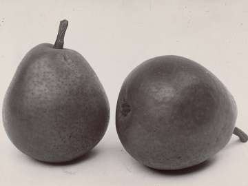 Pear, Buerre Superfine