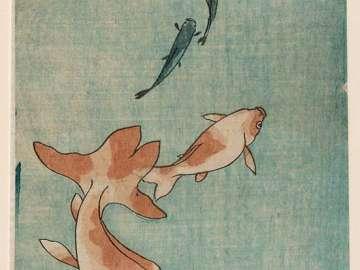 Goldfish and Killifish