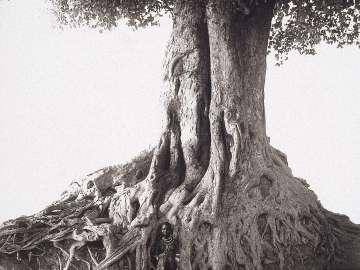Nangini, Giant Fig Tree, Africa