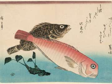 Sweet Sea Bream, Mebaru, and Horseradish, from an untitled series known as Large Fish