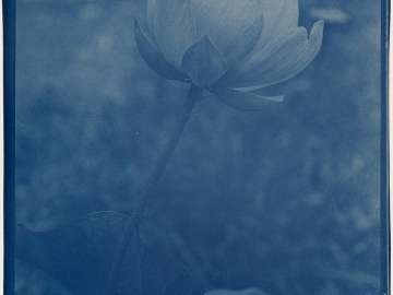 """Lotus, One of Our Flowers"""