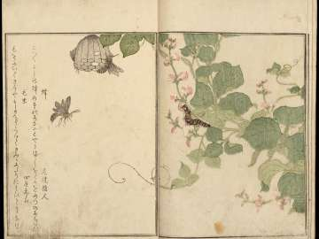 Ehon mushi erami (Picture Book of Selected Insects)