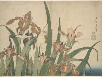 Irises and Grasshopper, from an untitled series known as Large Flowers