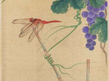 Dragonfly and Grapes from the album Birds and Flowers