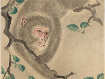 Monkey from the album Birds and Flowers