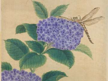 Hydrangeas from the album Birds and Flowers
