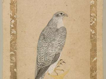 Obverse: Portrait of a Falcon; Reverse: A Young European Woman