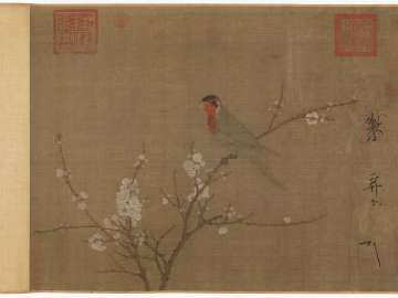Five-colored parakeet on a blossoming apricot tree