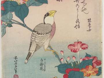 Hawfinch and Marvel-of-Peru (Ikaru, oshiroi no hana), from an untitled series known as Small Flowers