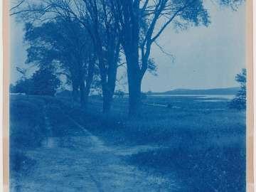 """""""Near Sam Spiller's"""" (trees along a road)"""