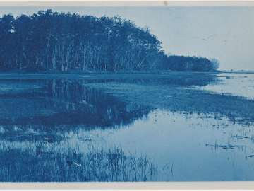Marsh Landscape with Trees in Background