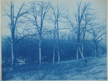 Row of Trees by a Marsh