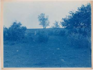 Trees, Bushes, Fence in a Field