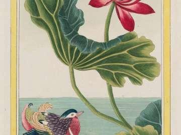 Lotus with Duck, Plate LXXXII from Part I (Plants of China) of Pierre Joseph Buchoz, Collection Précieuse et Enluminée des fleurs les plus belles et les plus curieuses, qui se cultivent tant dans les jardins de la Chine que dans ceux de l'Europe.
