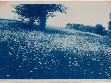 Field with Tree and Daisies