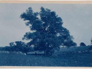 """Man Sitting under a Tree in a Field"""