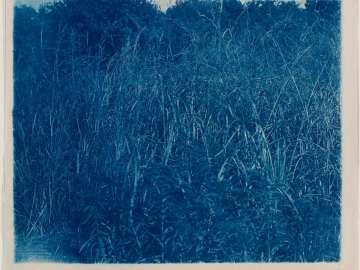 Grasses (variant)