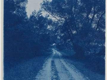 Lane Through Trees