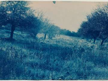 Trees in a Field (Orchard?)