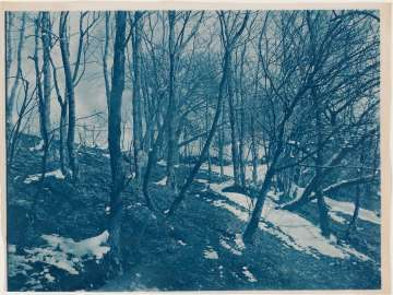 Trees and Patches of Snow