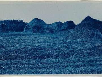 Piles of Hay